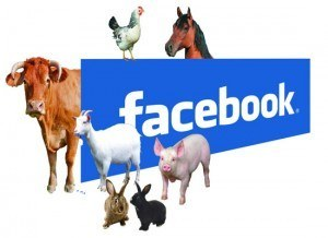 Facebook to help animals catch their prey and have a social life