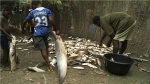 Temporary-fish-market-pollutes-Delta