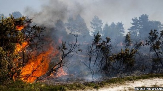 Japan-Firefighters-Tackle-Forest-Blaze-Near-Industrial-Site