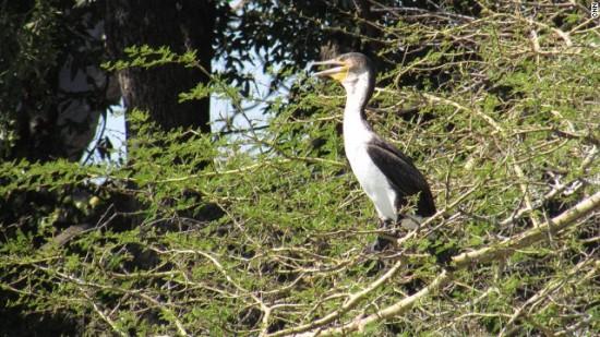 140806154417-malawi-bird-horizontal-gallery
