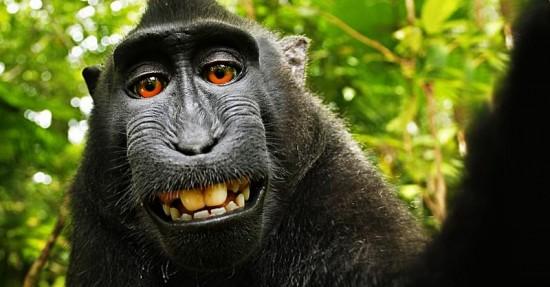 monkey-selfie-feature
