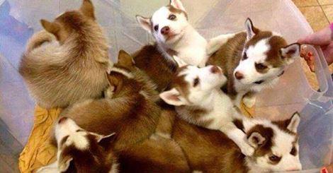 Unique Small Dog Breeds These Unique Dog Breeds