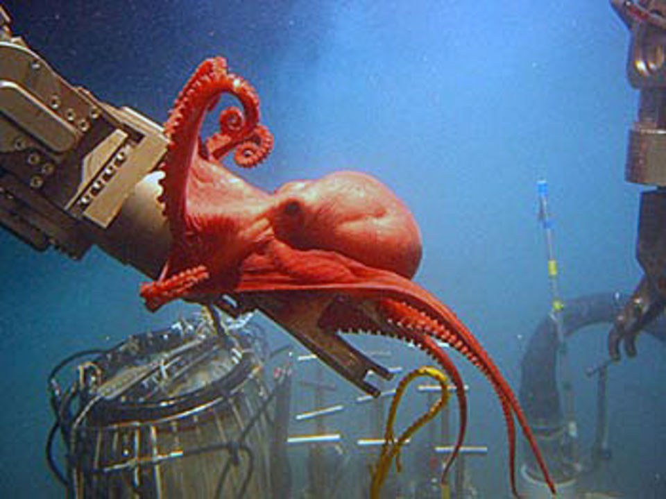 107 new species discovered in Gulf
