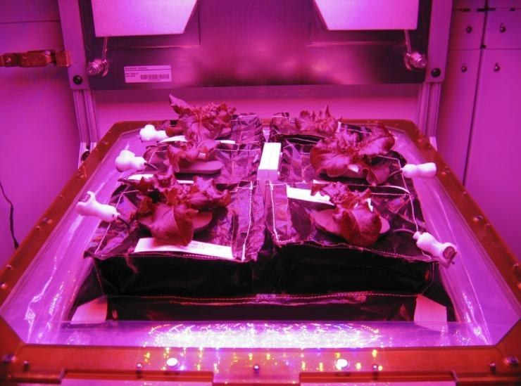NASA Astronauts Get to feast on space-grown Veggies Harvested on Monday for the first time ever