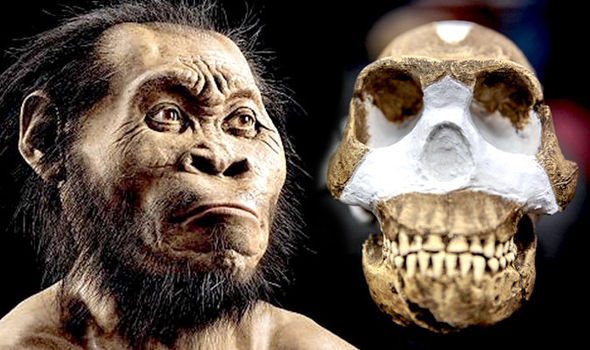 Homo-Naledi-New-species-of-ancient-human-ancestor-found-in-South-African-Cave