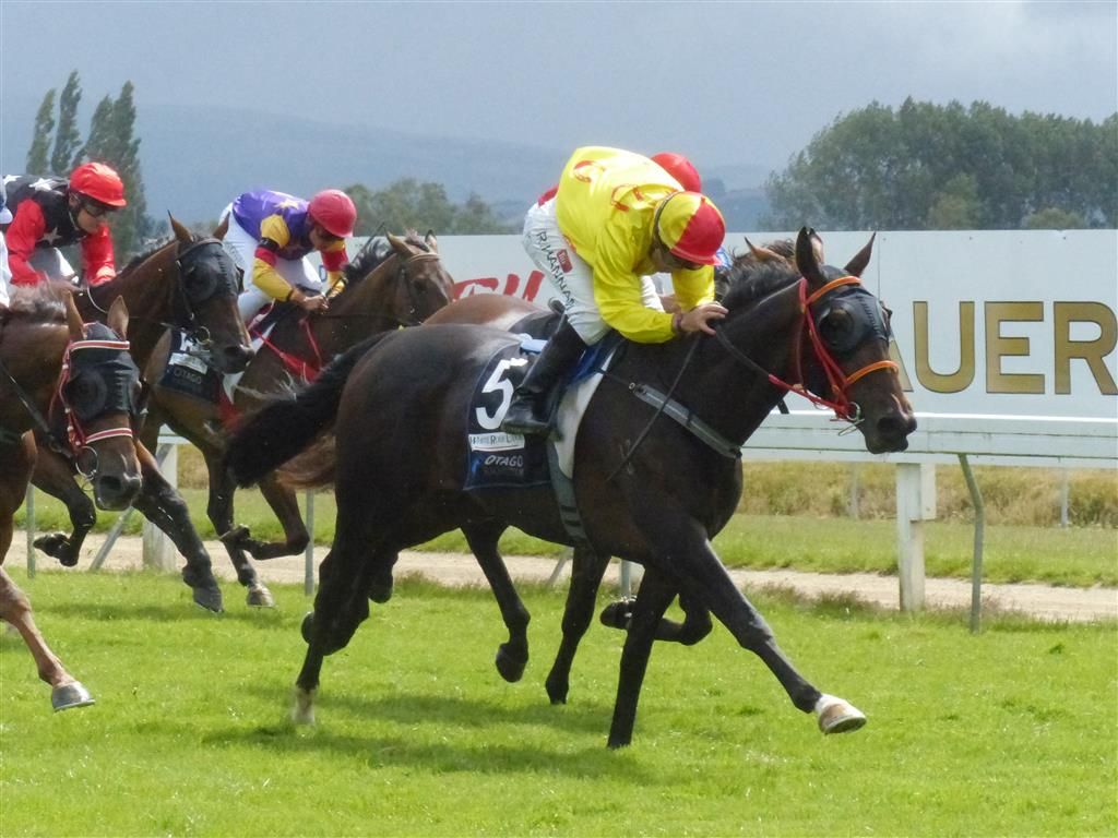 Nikki-Blatch-Wants-Genuine-Staying-Test-In-Wellington-Cup-At-Trentham