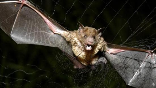 Rabid-Vampire-Bats-Kill-12-Indigenous-Children-In-Peru-Amazon