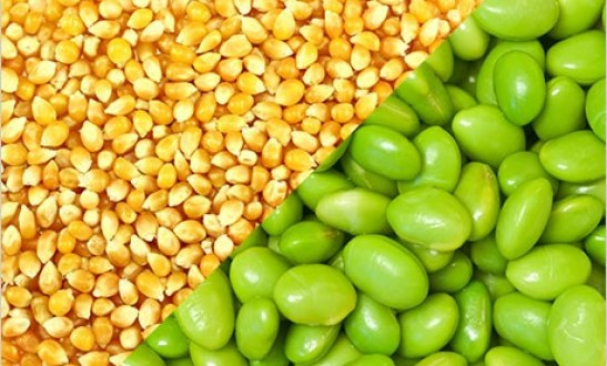 Russia Agriculture Watchdog Bans American Corn And Soybeans