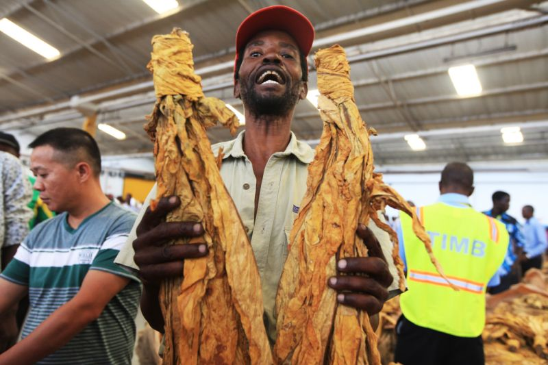 Zimbabwe-Tobacco-Farmers-Hit-By-Drought