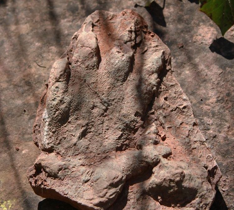 230 million year old dinosaur footprint found in spain