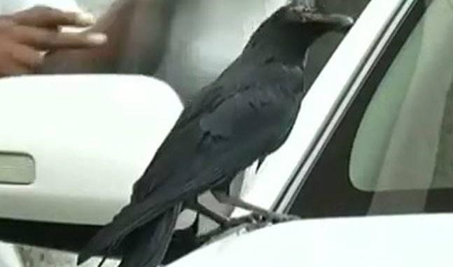 Karnataka-CM-Siddaramaiah-Changes-Car-After-Crow-Sits-On-It