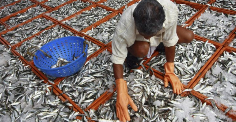 Fish, poultry become many problems to the human body