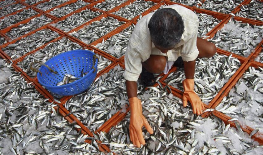 fish-farming_850