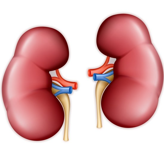 Healthy Lifestyle build a  Healthy Kidneys