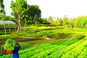 MANILA Inspiring: Making agriculture a viable career for millennials