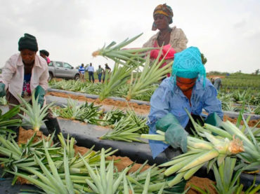 The Ugandan who left his advertising job for passion fruit farming: Eric Kaduru