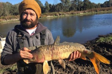 Australian's Herpes based carp control plan may stop fish exports in Papua New Guinea